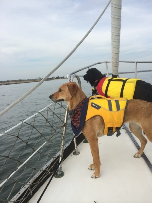 sailing dogs doggy lifejackets