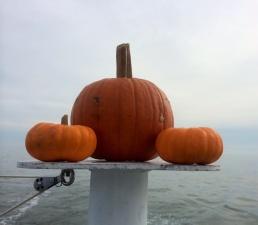 Pumpkins ahoy!