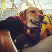 sailing dogs Long Island Sound
