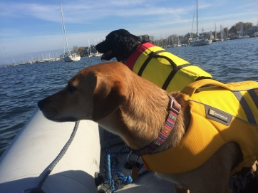 Dinghy dogs