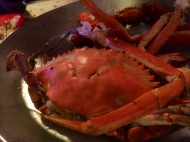 Annapolis blue crab