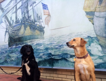 Navy dogs