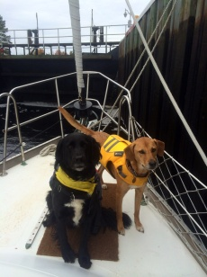 Dismal Swamp Canal lock dogs