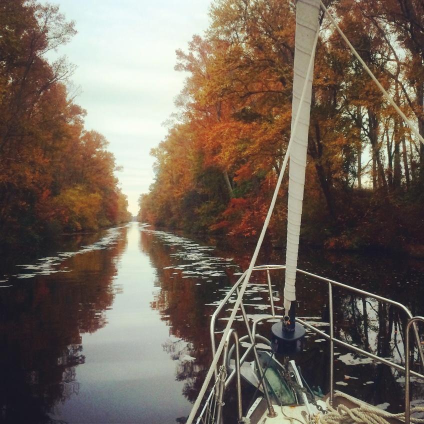 Dismal Swamp Canal foliage